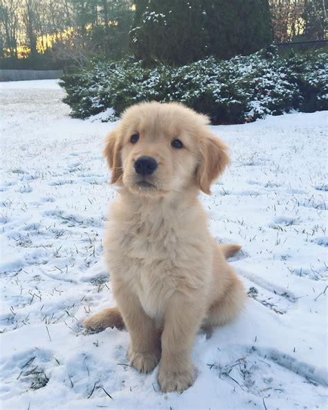 Pin By Hela On Cuties Pinterest Dogs Cute Dogs And