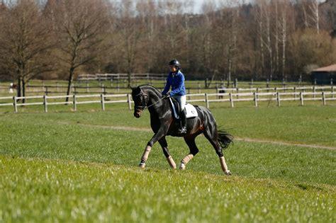 muskulatur und muskelaufbau des pferdes