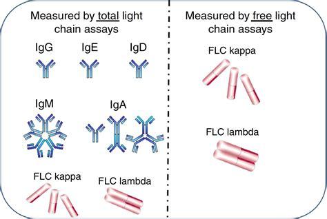 kappa light chain free kappa and lambda light chain www lightneasy net