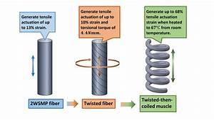 Artificial Muscles Show More Flex