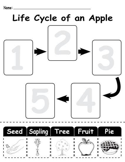 Apple Life Cycle Worksheet