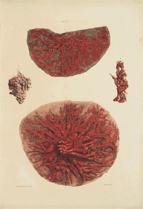 l anatomie des seins