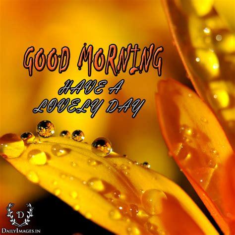 Morning Images Morning Flower Images Make The Day More Enjoyable
