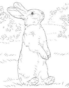 Bunny Rabbit Coloring Pages | Lop-eared Bunny Drawing by