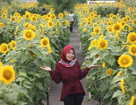 Pandeglang merupakan sebuah kabupaten di banten, kabupaten ini memiliki sejuta pesona dan berikut kami ulas secara singkat 30 tempat wisata di pandeglang terbaru yang harus segera anda. Alamat Dan Tiket Taman Bunga Matahari Pantai Glagah Kulon Progo