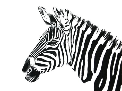 black  white animal drawings clipartsco