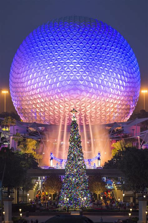 behold  beautiful christmas trees  walt disney world resort disney parks blog