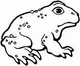 Toad Coloring Printable Frog Rospo Colorare Colorear Grenouille Disegno Ropucha Kolorowanki Clipart Dessin Coloriages Animaux Disegni Coloriage Dibujos Crapaud Bestcoloringpagesforkids sketch template