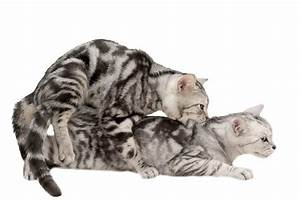 How Do Cats Mate   3 Facts That Will Blow Your Mind