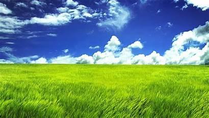Rumput Padang Pertanian Sawah Lingkungan Ekosistem Alam