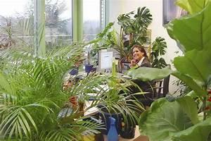 Büro Pflanzen Pflegeleicht : vorsorge mit gr n arbeitspl tze mit pflanzen bedarfsgerecht gestalten pflanzen f r menschen ~ Michelbontemps.com Haus und Dekorationen
