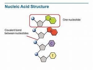 The Structure of DNA Read the title aloud to students ...