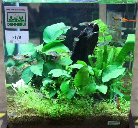 nano aquarium fish freshwater aquarama 2011 asia s largest ornamental and aquatic fish show