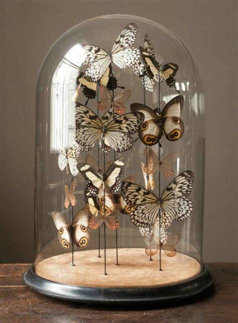 papier peint cabinet de curiosite best 25 glass dome display ideas only on cloche decor glass domes and easter d 233 cor
