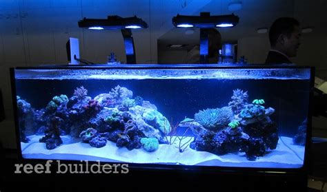 nuvo shallow reef series aquariums are well equipped for reefing news reef builders