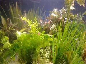 Aquarium Pflanzen Schnellwachsend : wasserpflanzen komplett set f r 500 liter aquarium top in elstertrebnitz tiere kleinanzeigen ~ Frokenaadalensverden.com Haus und Dekorationen