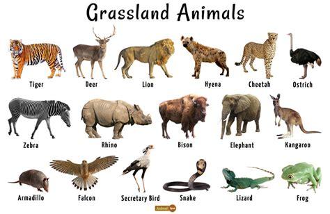 African Game Animals