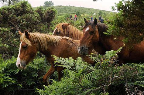 horses long horse lives learn