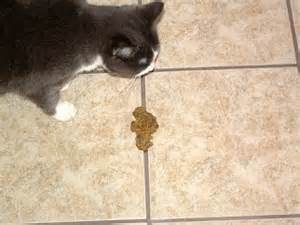 cat vomit cats and vomiting