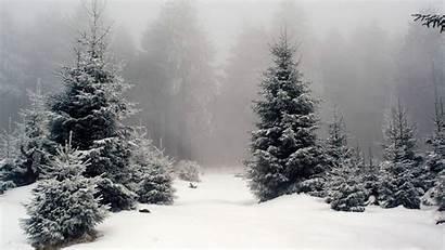 Forest Snow Landscape Nature Wallpapers Desktop Backgrounds