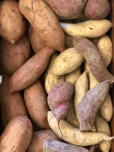 Make the most of sweet potato harvest time with tasty ...