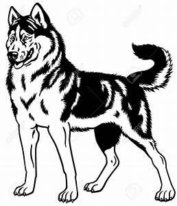 Pics For > Husky Dog Line Drawing | Husky | Pinterest ...