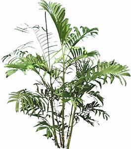 Pot De Fleur Transparent : arbres d tour s gratuits et v g tation banque d 39 images plantes png pinterest gratuit ~ Teatrodelosmanantiales.com Idées de Décoration