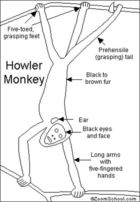 howler monkey printout enchantedlearning com
