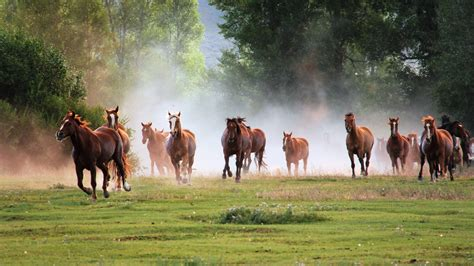 horses wallpapers pictures images