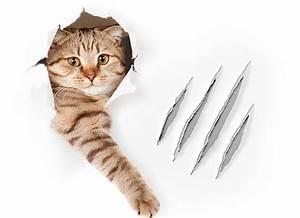 Anti Griffe Chat : comment et pourquoi couper griffes chat ~ Premium-room.com Idées de Décoration