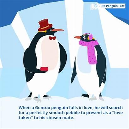 Penguin Facts Penguins Interesting Gentoo Parents Fun