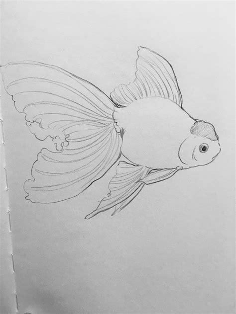 disegni per dipingere ad acquerello pin di 行星菌 su gold fish pittura ad