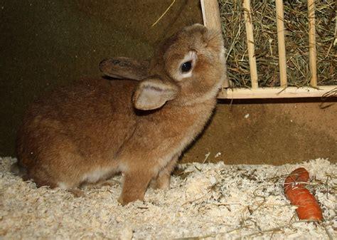 verhalten kaninchen haltungcom