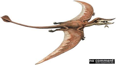 Dinosauro Volante Pt 233 Rosaure Au Pays Des Reptiles Volants