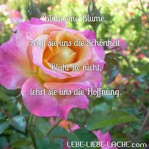 Anthurie Blüht Nicht : spruchkarte mit zitat bl ht eine blume zeigt sie uns die sch nheit bl ht sie nicht lehrt ~ Frokenaadalensverden.com Haus und Dekorationen
