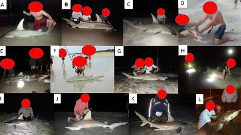 endangered sharks shark targeting conservation anglers florida fish species