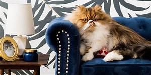 Celebrate National Cat Day With This Beautiful Cat Room