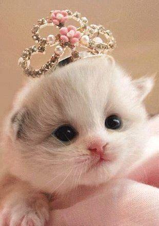 cute kitten  tiara luvbat