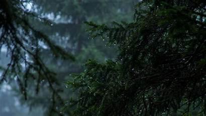 Fog Rain Dark Drops Forest Rainy Laptop