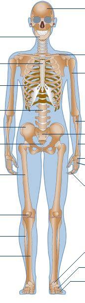 bbc science nature human body  mind anatomy
