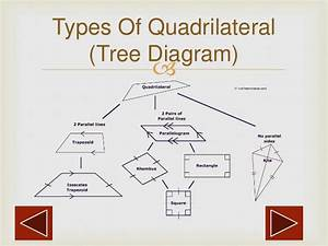 Quadrilateral Diagram Tree