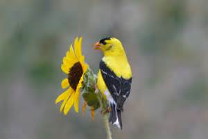 painting a mobile home interior goldfinch hd wallpapers