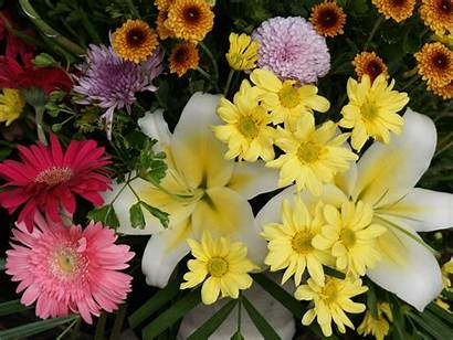 Flowers Cool Wallpapers