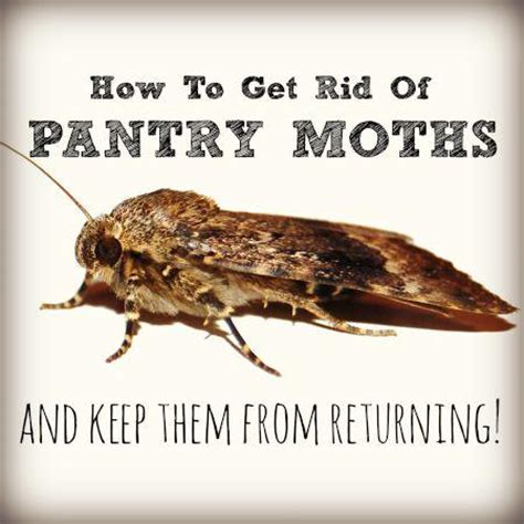 how to get rid of pantry moths