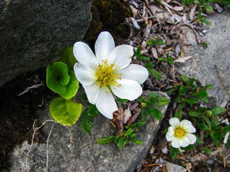 images blossom bloom botany wildflower