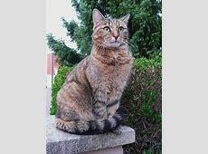 FileGrüne Augen einer KatzeJPG Wikimedia Commons