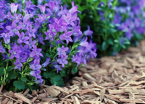 Pilze Im Garten Durch Rindenmulch by Cemwood Gala Deko Stixx Farbige Gartengestaltung Deko