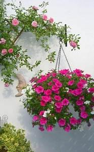 Ampelpflanzen Und Hängepflanzen Garten : petunie garten petunien garten pflanzen und ampelpflanzen ~ Buech-reservation.com Haus und Dekorationen