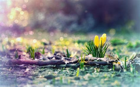 Early Spring Hd Wallpaper (50+ Images