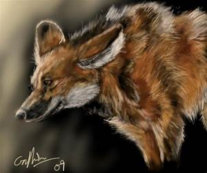 Maned Wolf by SilverFlight on DeviantArt
